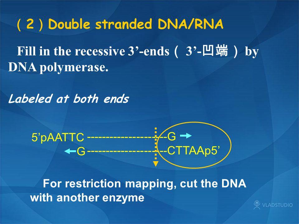 (2)Double stranded DNA/RNA