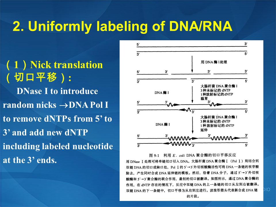 2. Uniformly labeling of DNA/RNA
