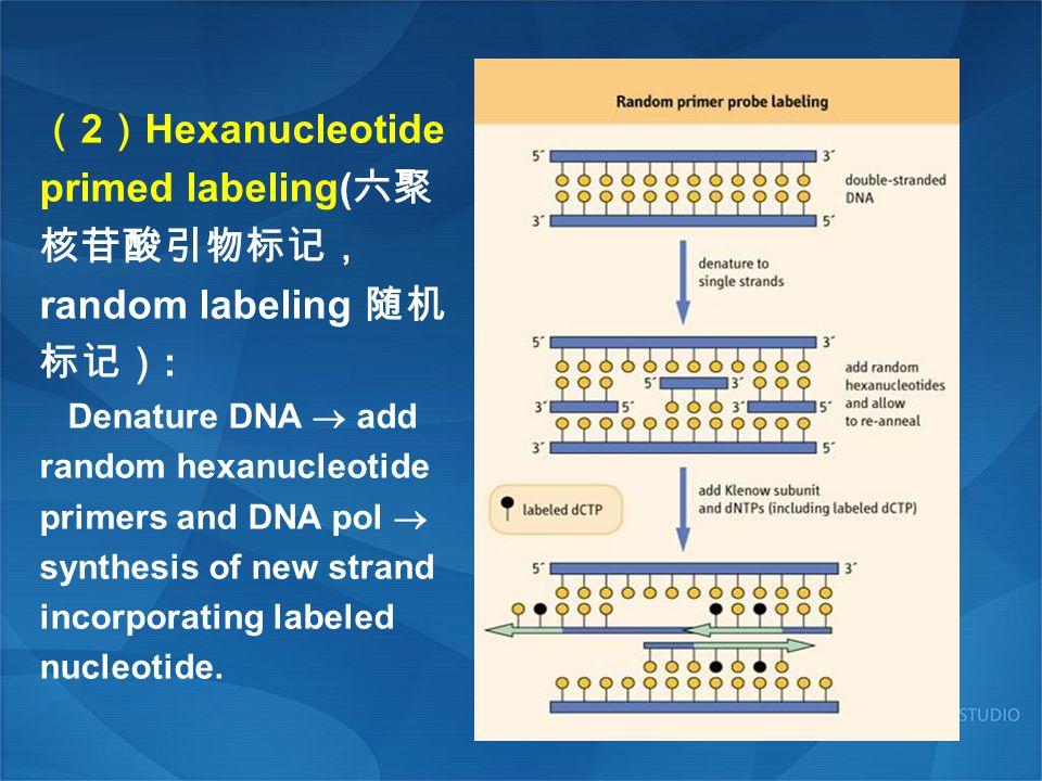 (2)Hexanucleotide primed labeling(六聚核苷酸引物标记,random labeling 随机标记):