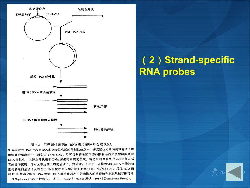 (2)Strand-specific RNA probes