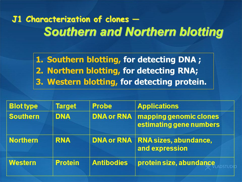 J1 Characterization of clones — Southern and Northern blotting
