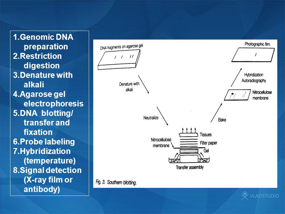 1.Genomic DNA preparation