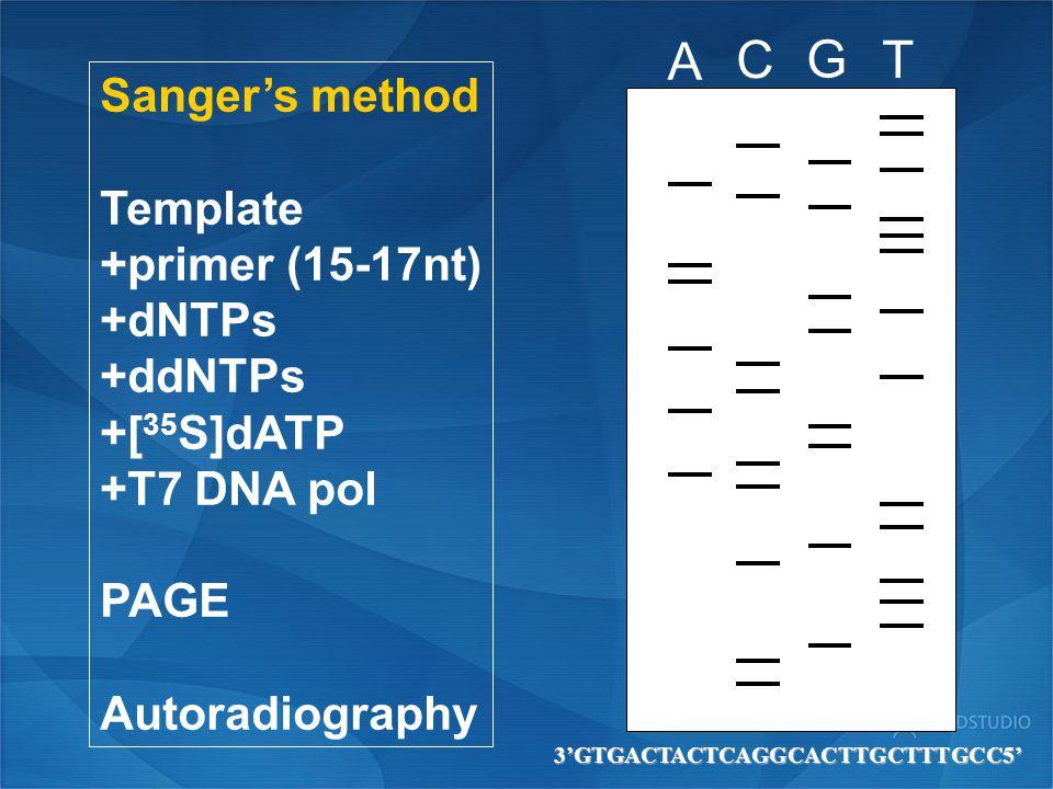 A C G T Sanger's method Template +primer (15-17nt) +dNTPs +ddNTPs