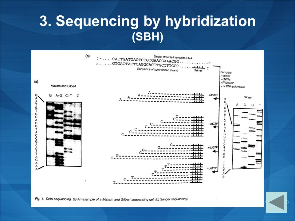 3. Sequencing by hybridization (SBH)