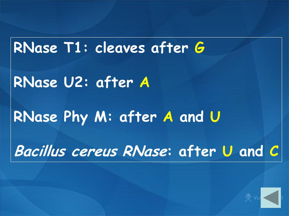 RNase T1: cleaves after G