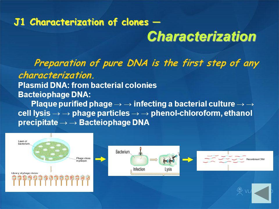 J1 Characterization of clones — Characterization