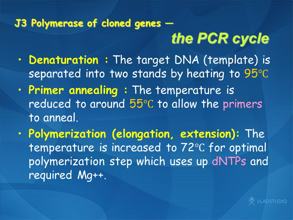 J3 Polymerase of cloned genes — the PCR cycle