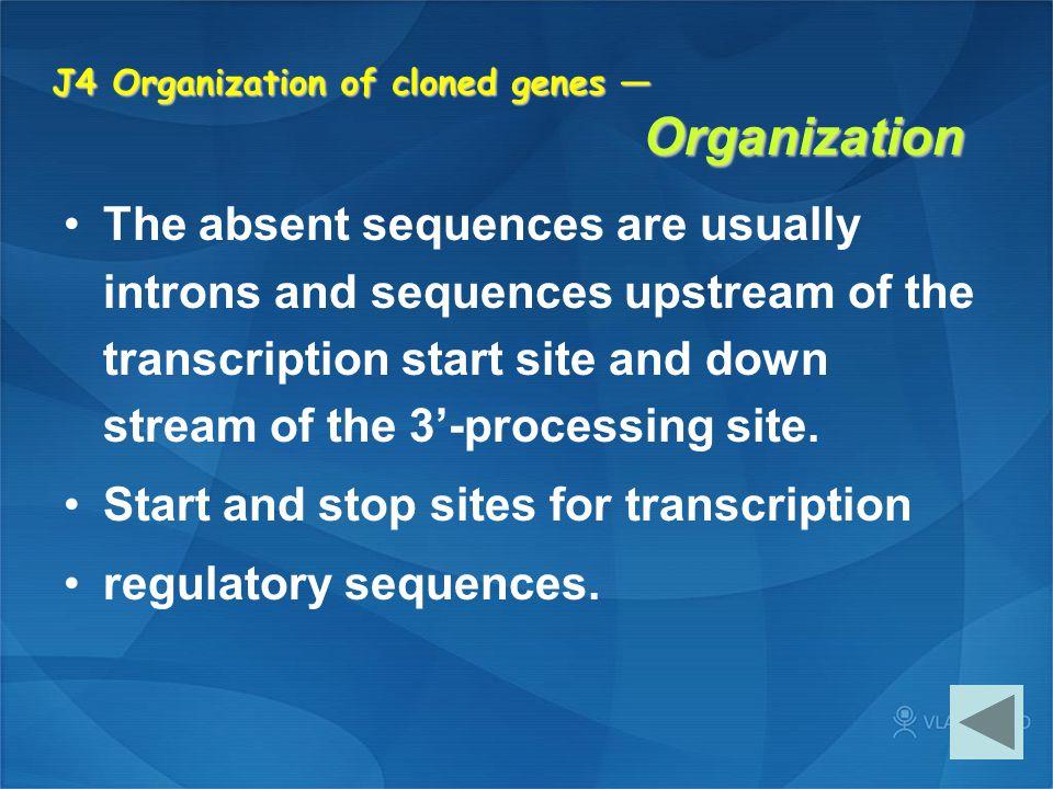 J4 Organization of cloned genes — Organization
