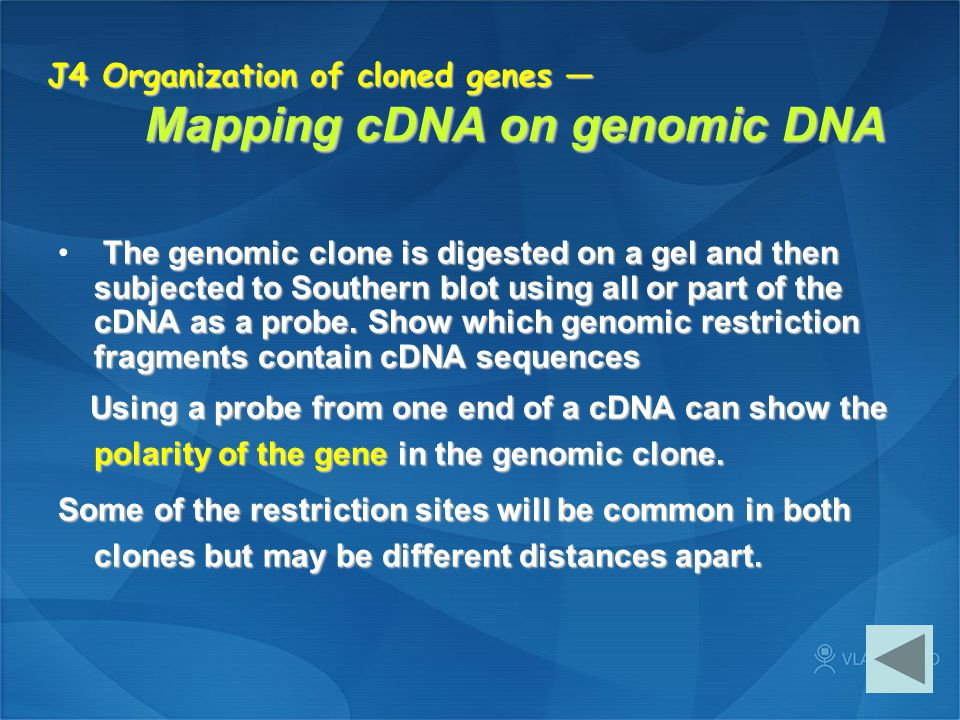 J4 Organization of cloned genes — Mapping cDNA on genomic DNA