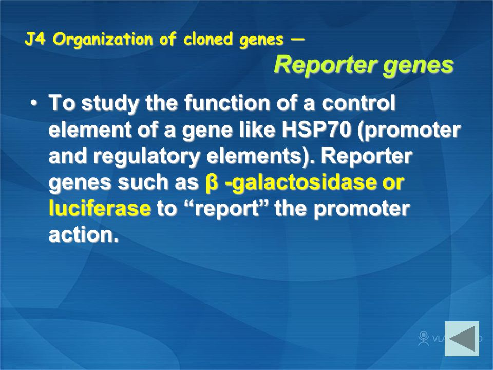 J4 Organization of cloned genes — Reporter genes