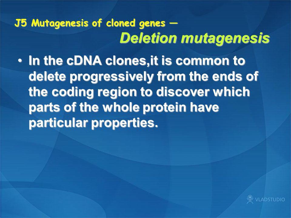J5 Mutagenesis of cloned genes — Deletion mutagenesis