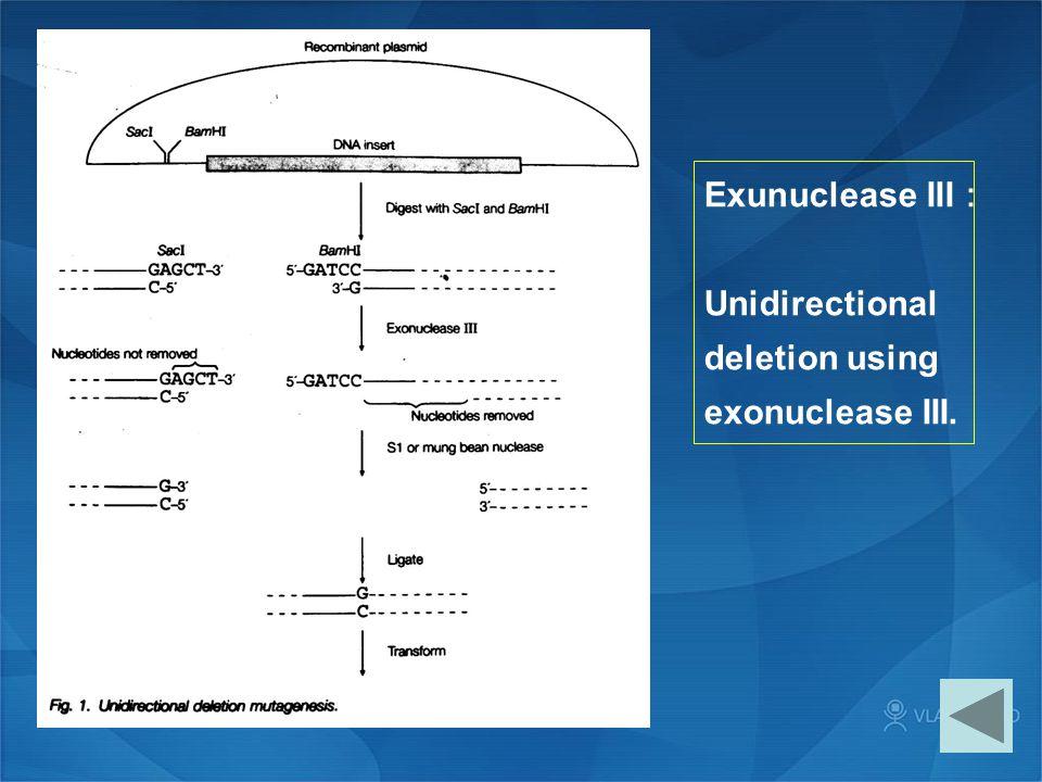 Exunuclease III: Unidirectional deletion using exonuclease III.