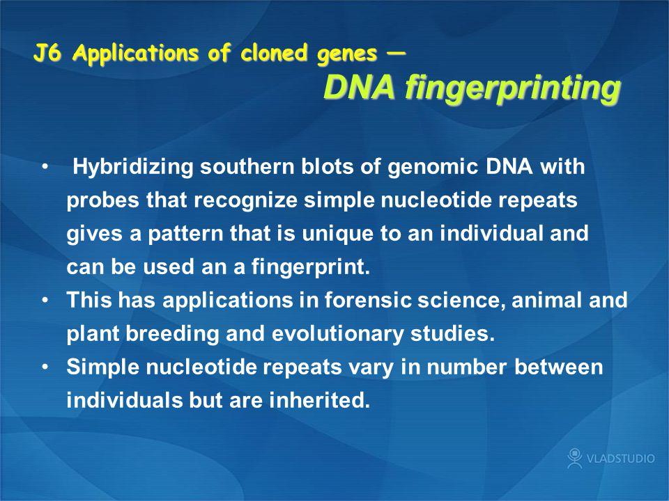 J6 Applications of cloned genes — DNA fingerprinting