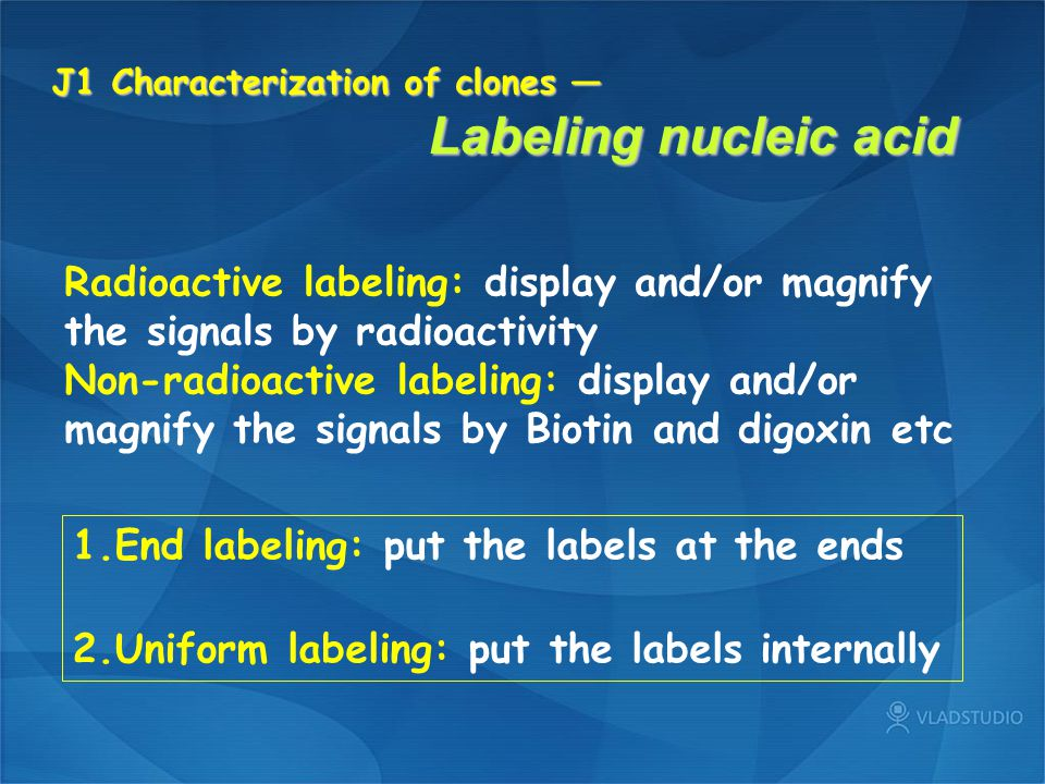 J1 Characterization of clones — Labeling nucleic acid