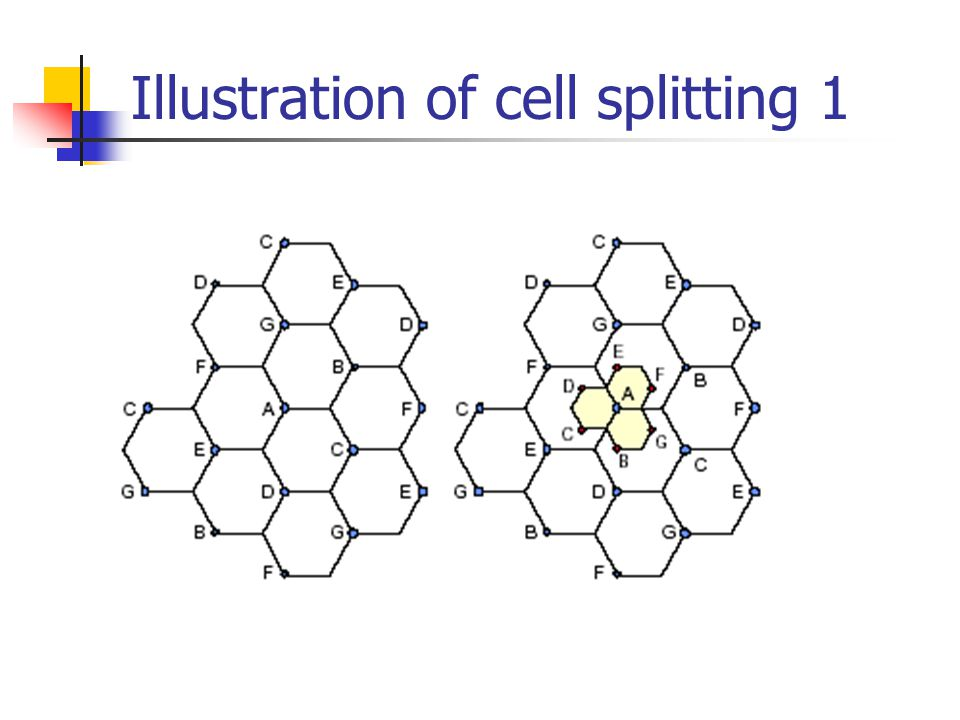 Illustration of cell splitting 1