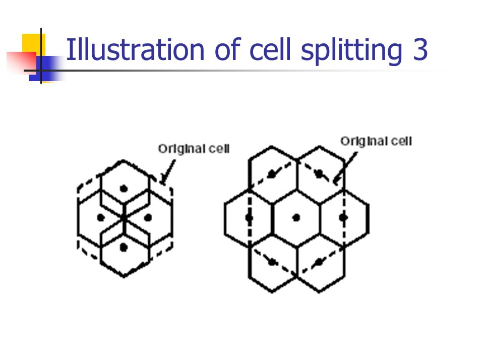 Illustration of cell splitting 3