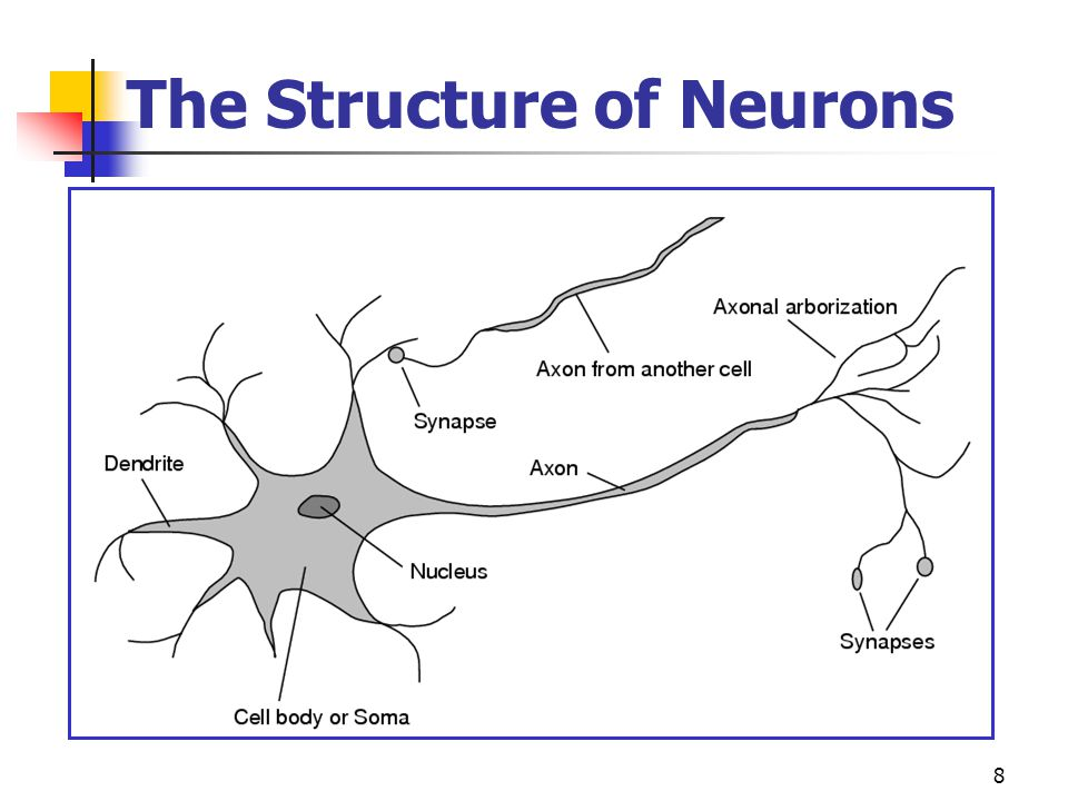 The Structure of Neurons
