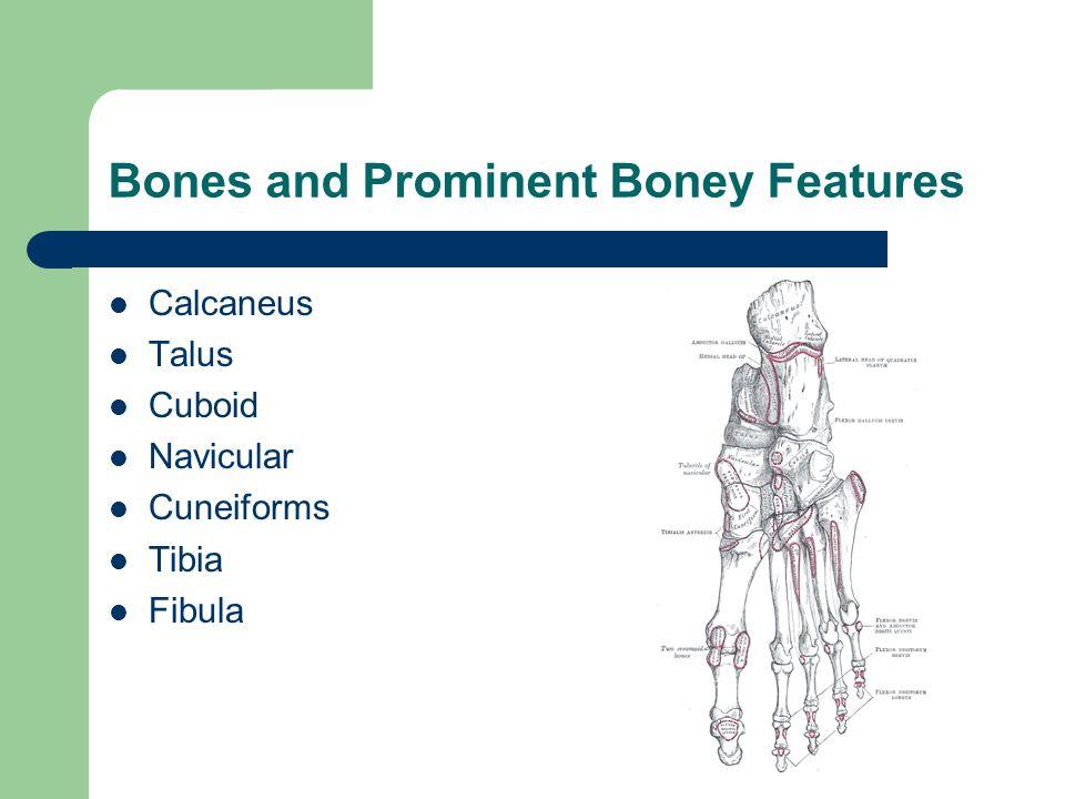 Bones and Prominent Boney Features