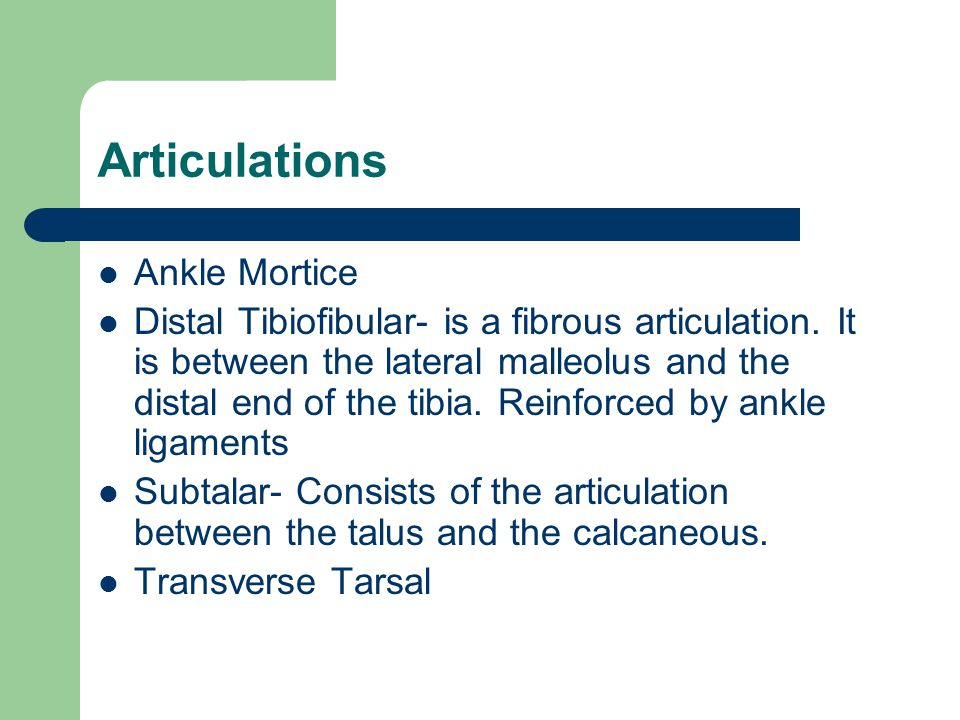 Articulations Ankle Mortice