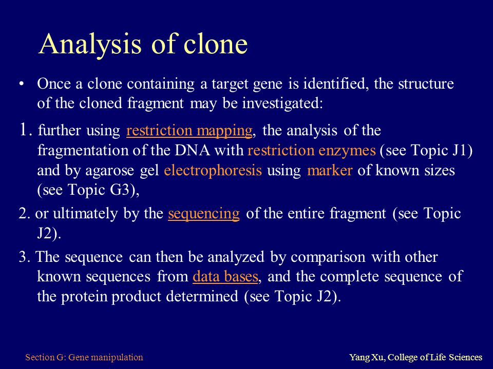 Analysis of clone Once a clone containing a target gene is identified, the structure of the cloned fragment may be investigated: