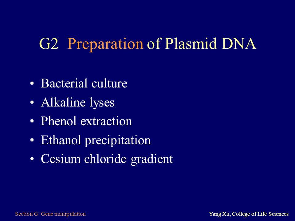 G2 Preparation of Plasmid DNA