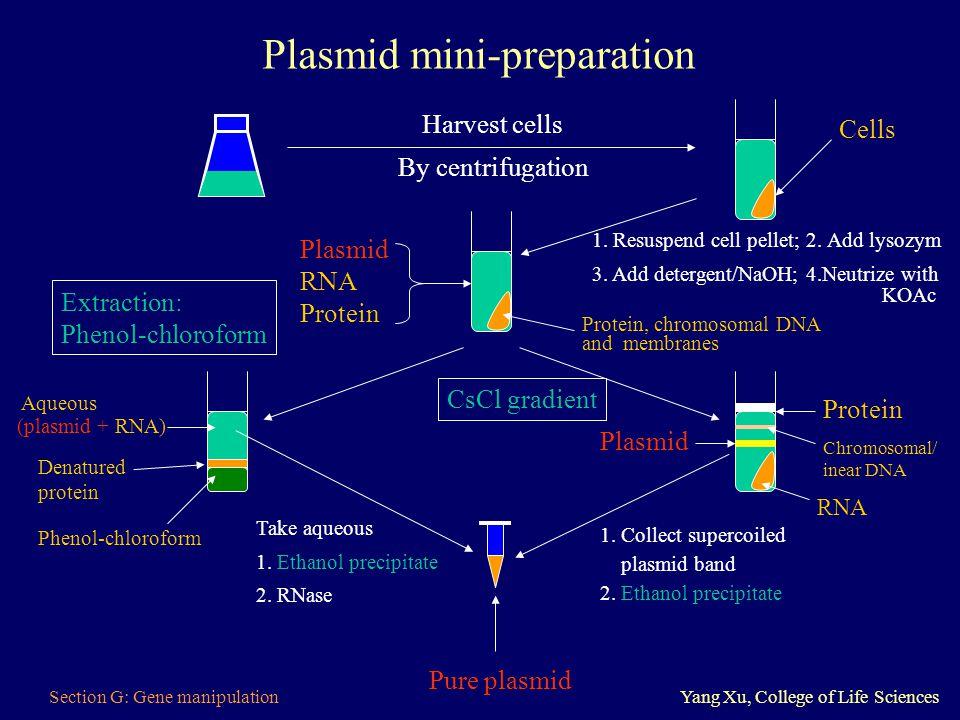 Plasmid mini-preparation