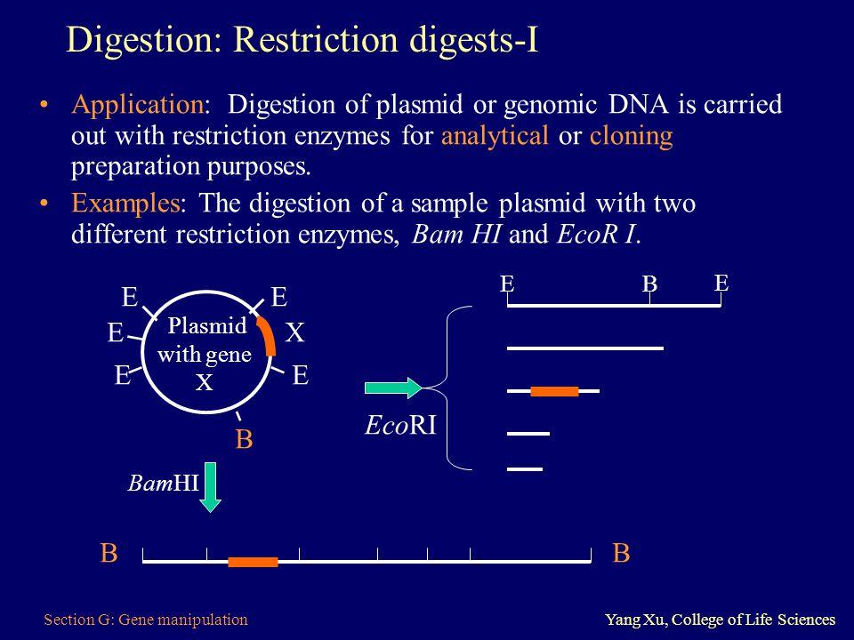Digestion: Restriction digests-I