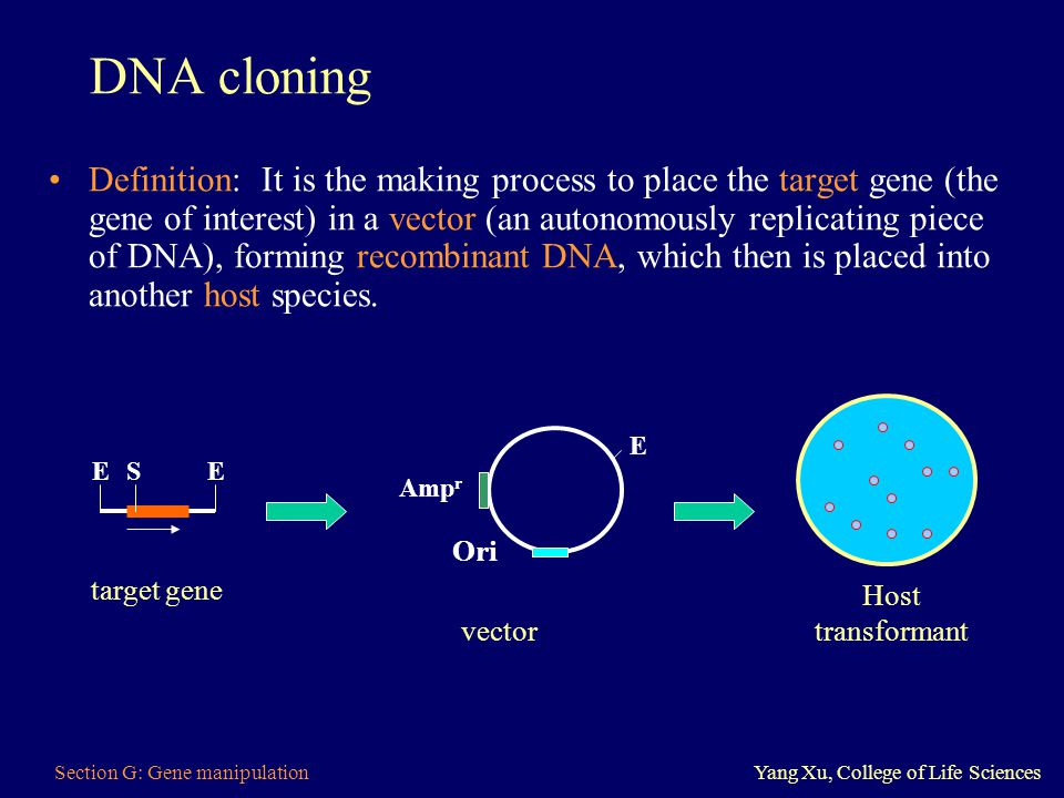 an analysis of cloning as defined by princeton He received his ab in chemistry from princeton university and his  identification of mutationally defined  gene cloning made numerous sequences available.