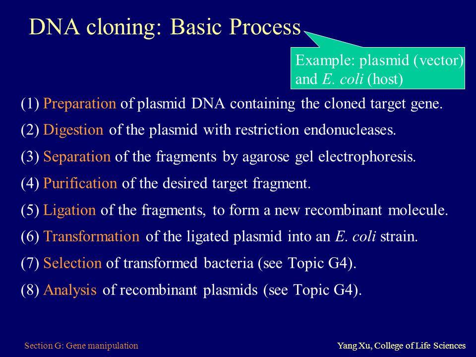 DNA cloning: Basic Process