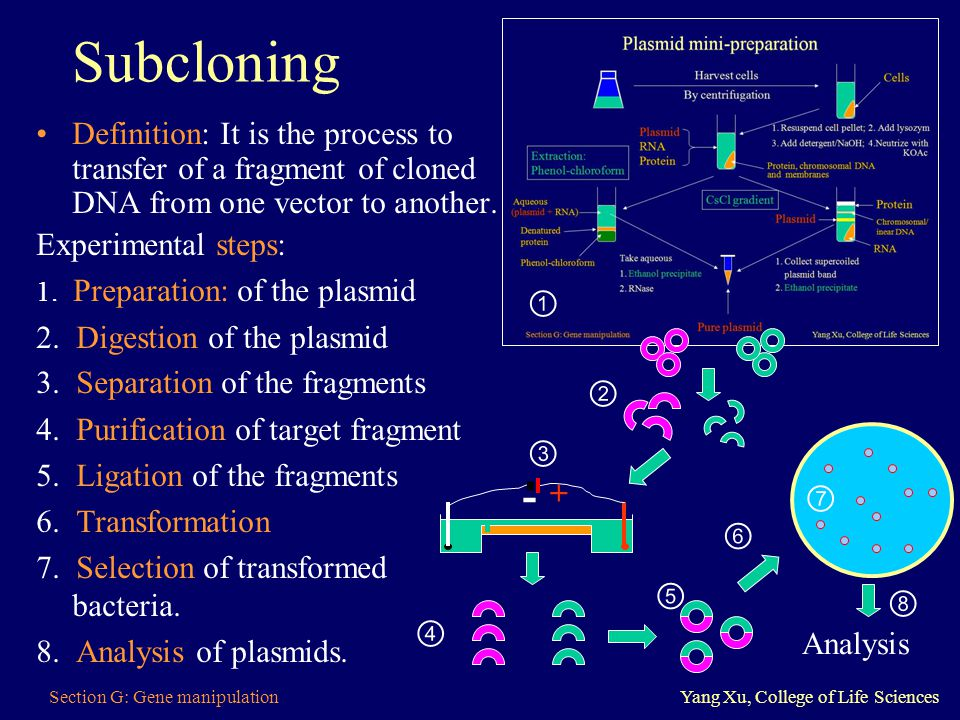 Subcloning Definition: It is the process to transfer of a fragment of cloned DNA from one vector to another.