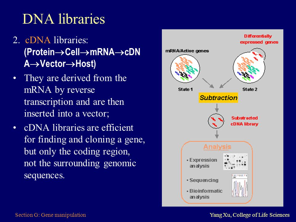DNA libraries 2. cDNA libraries: (ProteinCellmRNAcDNAVectorHost)