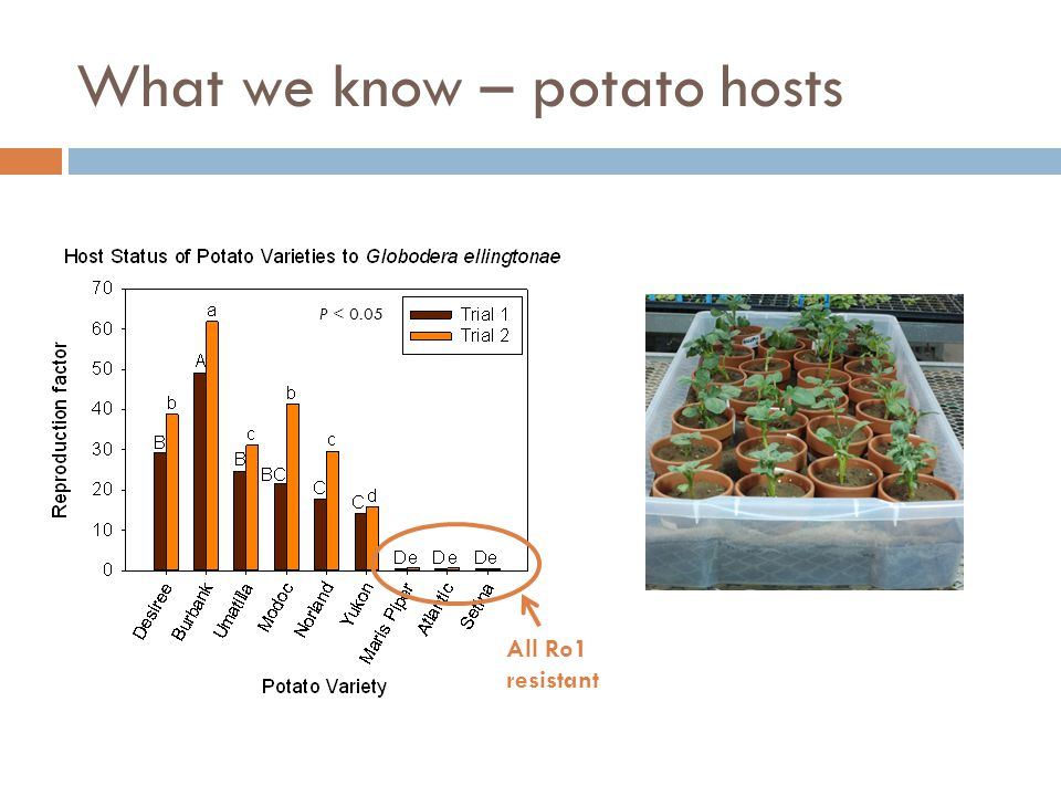 What we know – potato hosts