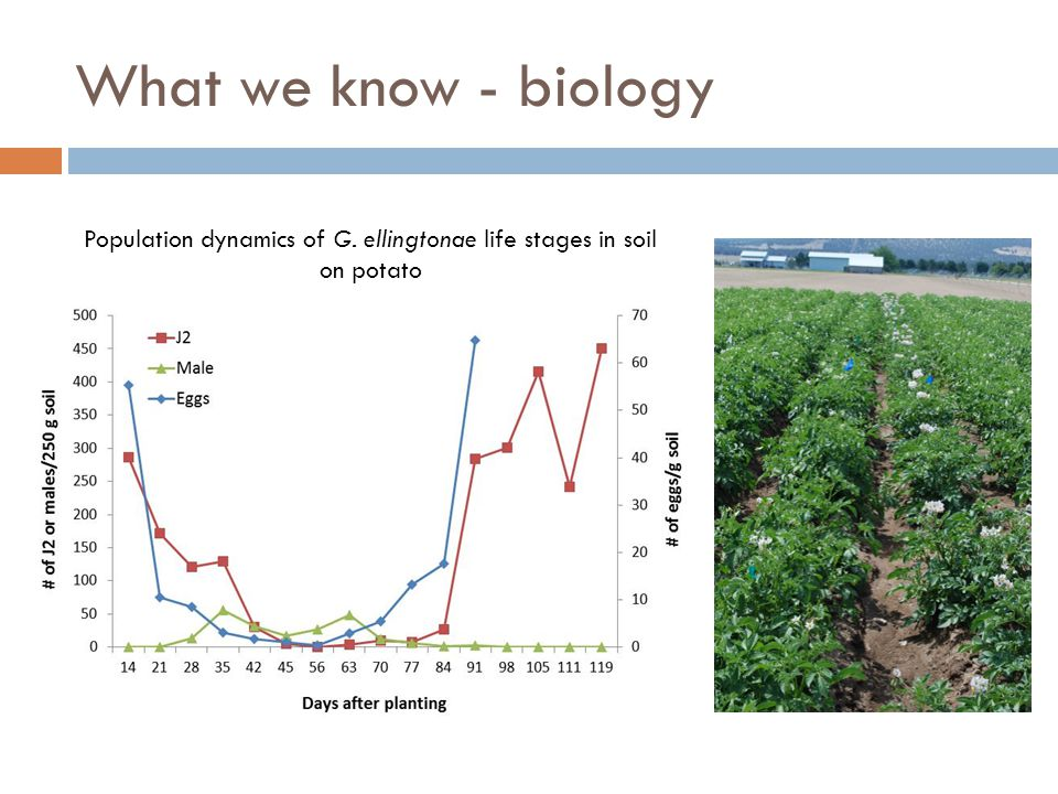 Population dynamics of G. ellingtonae life stages in soil on potato