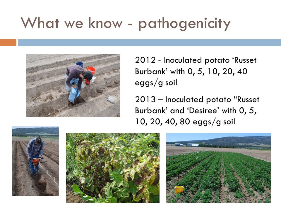 What we know - pathogenicity