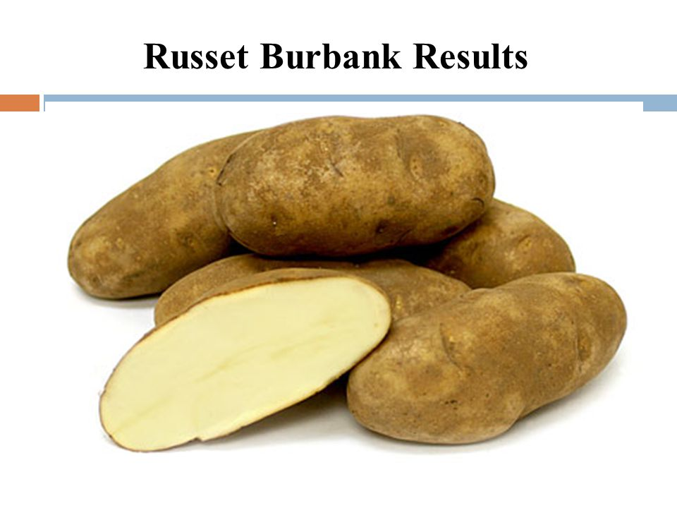 Russet Burbank Results