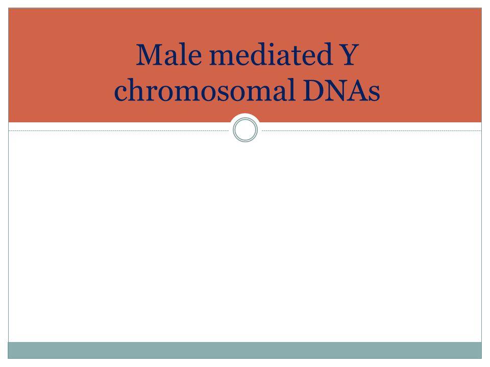 Male mediated Y chromosomal DNAs