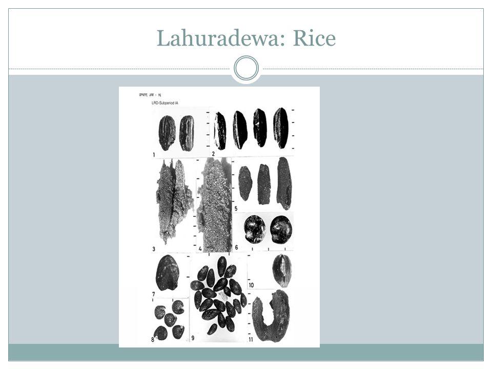 Lahuradewa: Rice