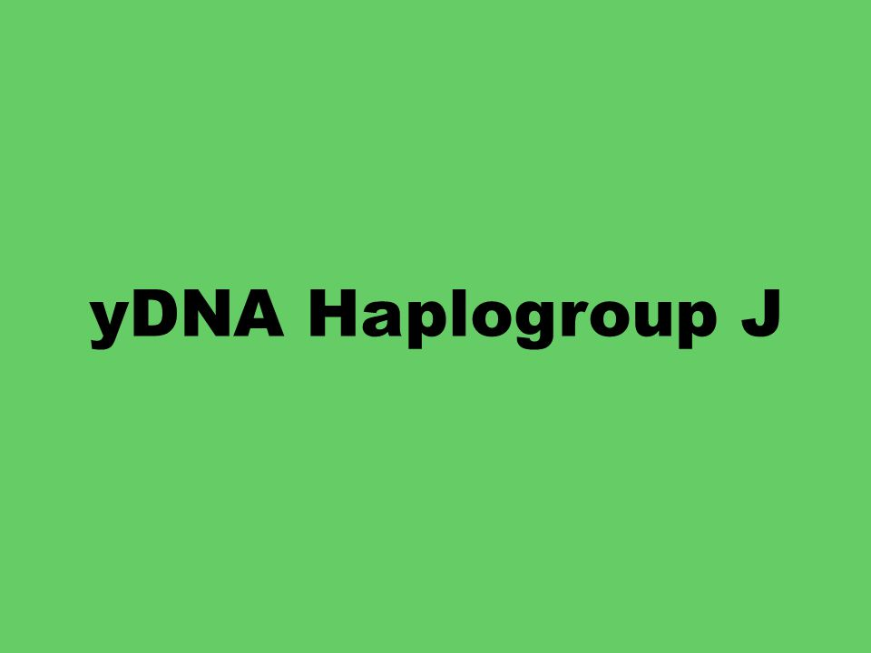 yDNA Haplogroup J