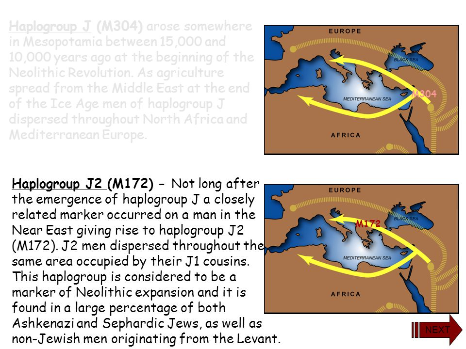 Haplogroup J (M304) arose somewhere in Mesopotamia between 15,000 and