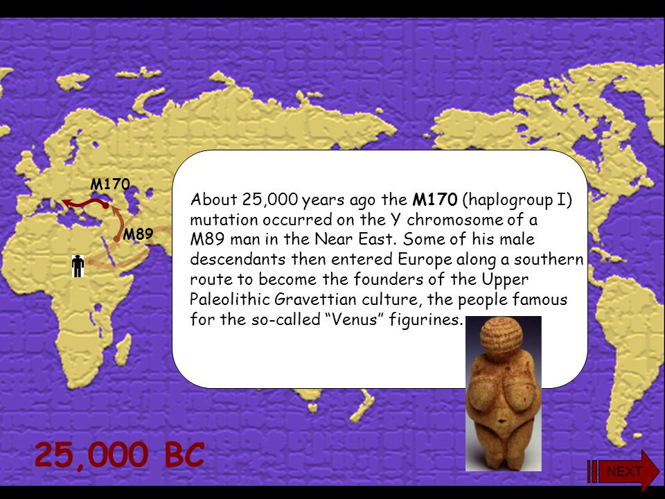 25,000 BC About 25,000 years ago the M170 (haplogroup I)