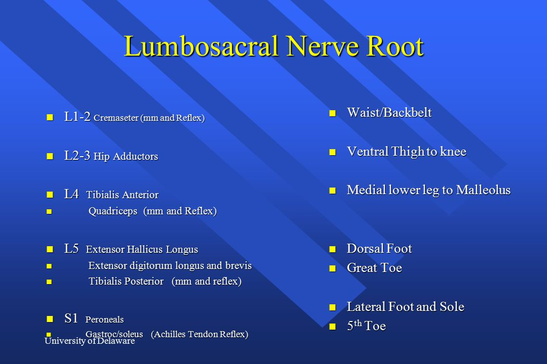 Lumbosacral Nerve Root