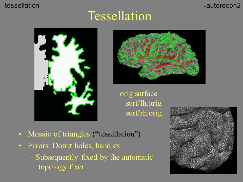Tessellation orig surface surf/lh.orig surf/rh.orig