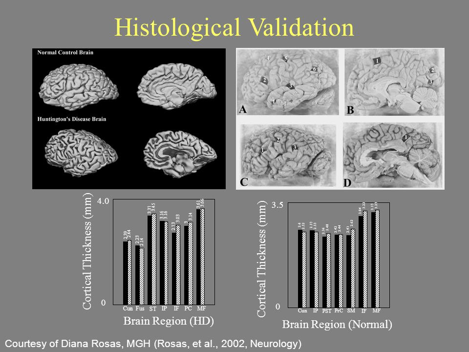 Histological Validation