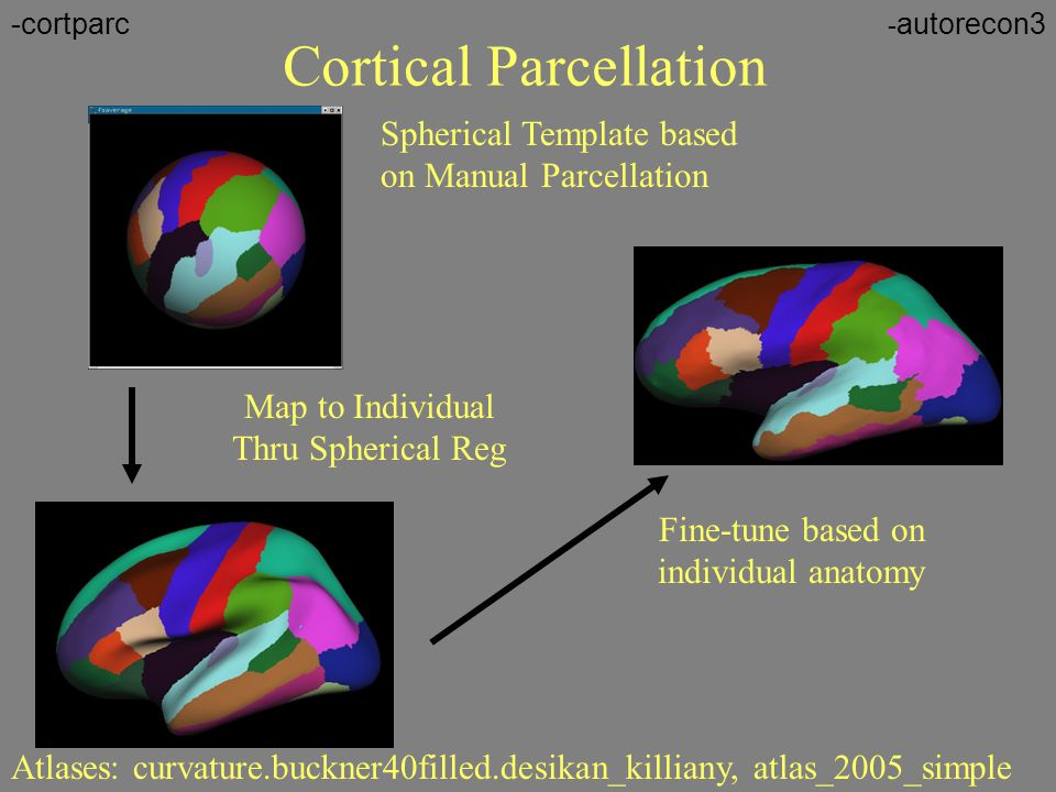 Cortical Parcellation
