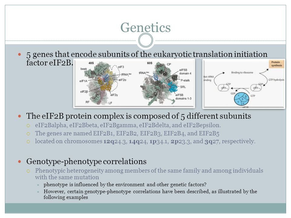 Genetics 5 genes that encode subunits of the eukaryotic translation initiation factor eIF2B.