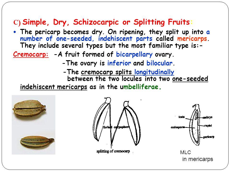 C) Simple, Dry, Schizocarpic or Splitting Fruits: