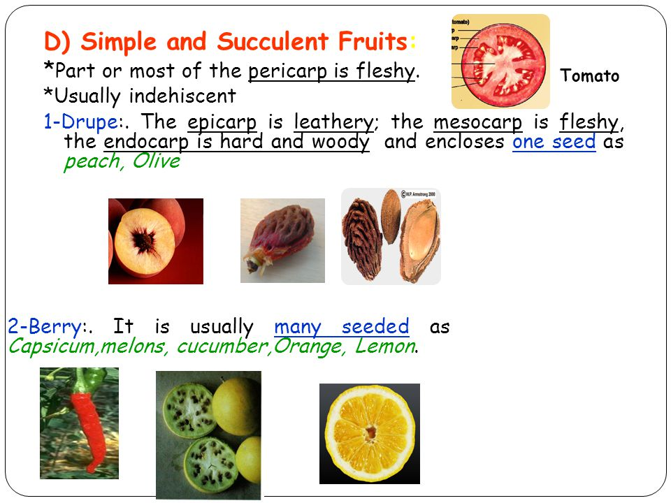 D) Simple and Succulent Fruits: