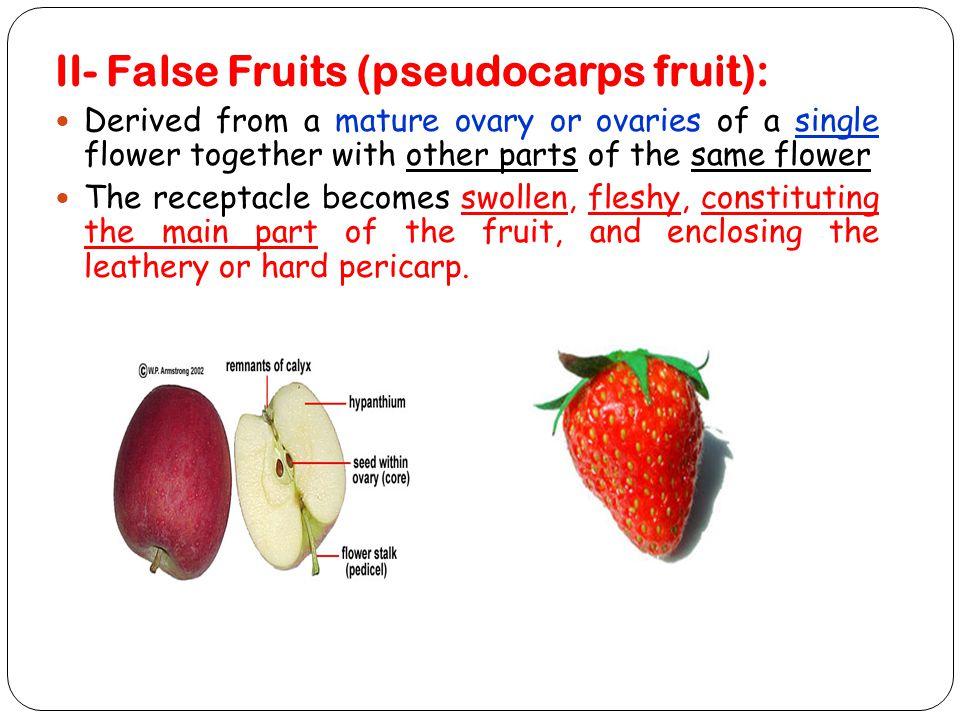 II- False Fruits (pseudocarps fruit):