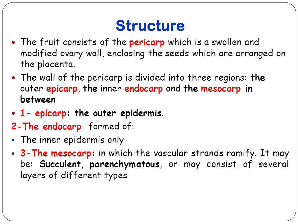 Structure The fruit consists of the pericarp which is a swollen and modified ovary wall, enclosing the seeds which are arranged on the placenta.