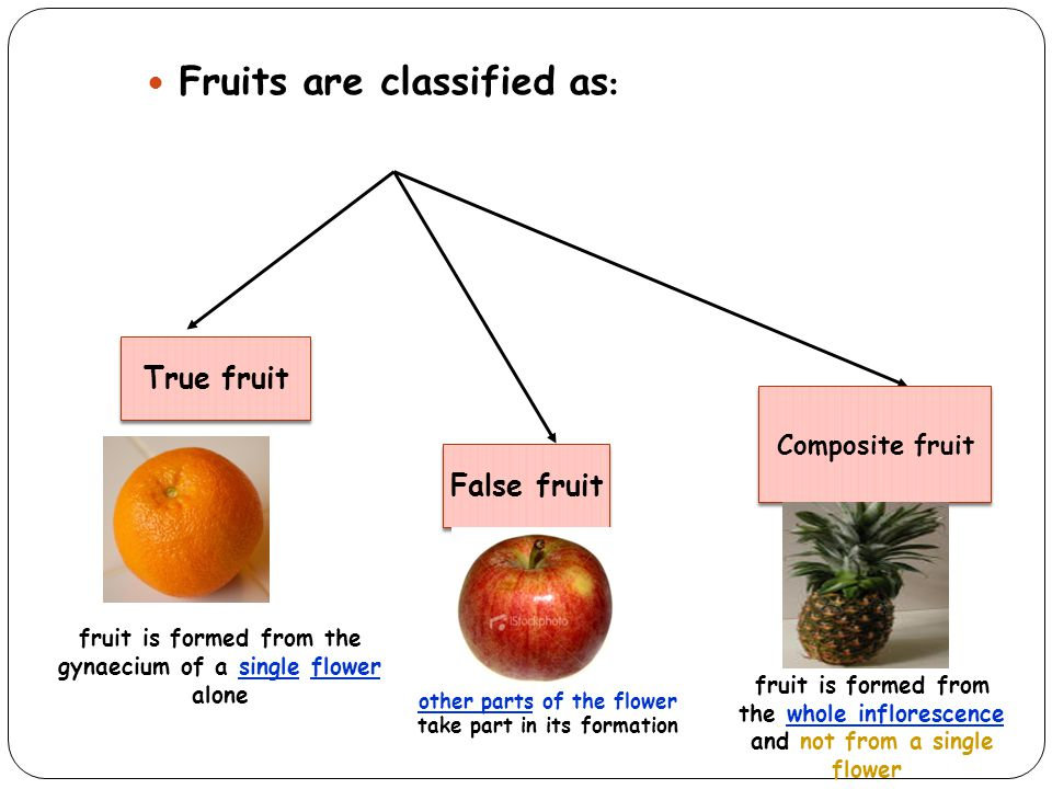 Fruits are classified as: